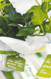 Ivy_plants_4