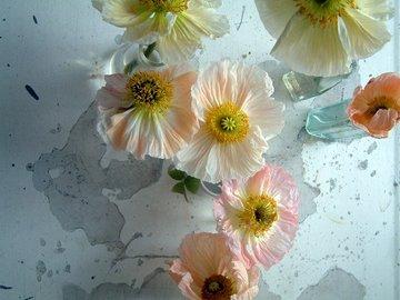 Poppies2_2