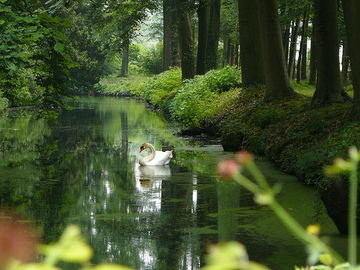 Holland_1_2
