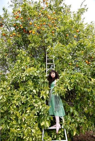 Orange_grove_2