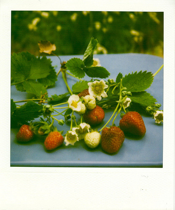 Strawberries_polaroid