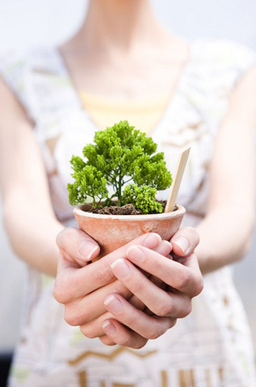 Growing gardens + frolic