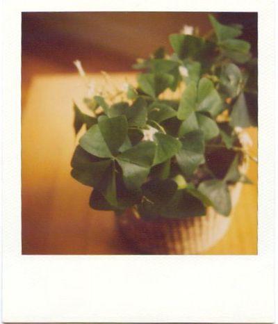 St patrick's day polaroid