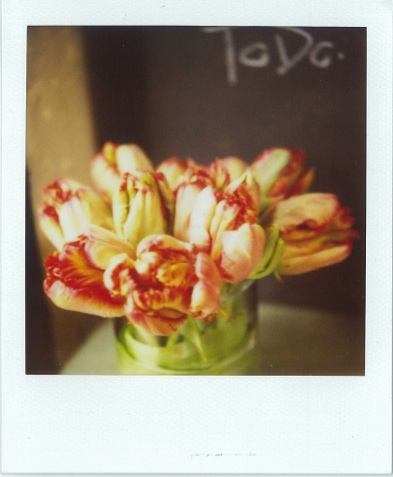 Parrot_tulips_Quince_Flowers
