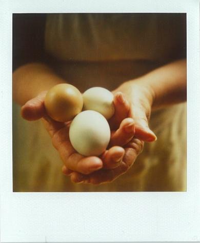 Fresh_easter_eggs