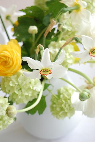 Green_yellow_wedding_ranunculus
