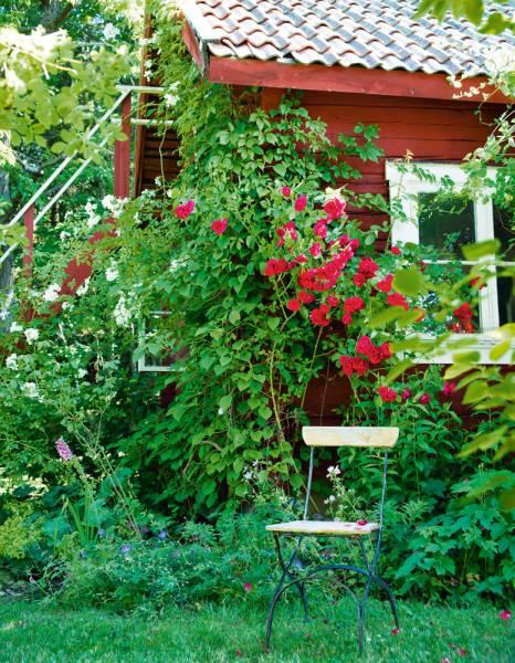 Swedish-garden