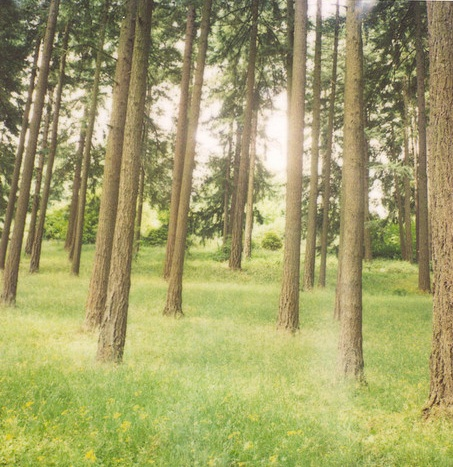 Polaroid-woods