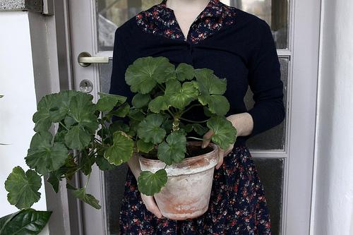 Gardening-blog