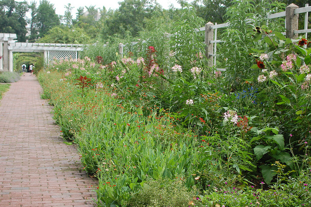 Brooklyn botanic garden rose garden