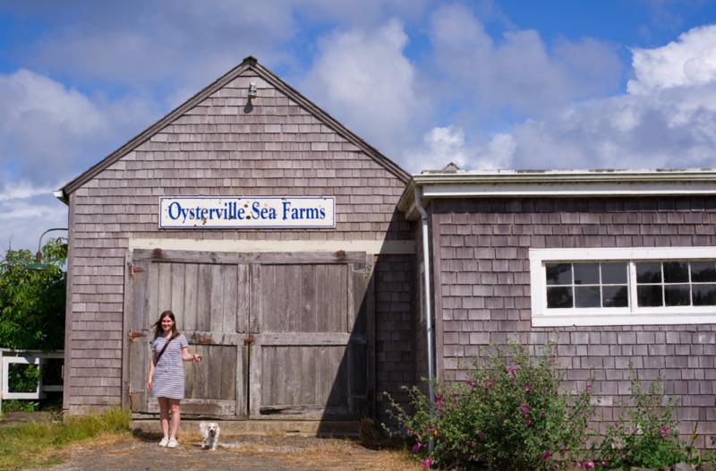 chelsea fuss oysterville