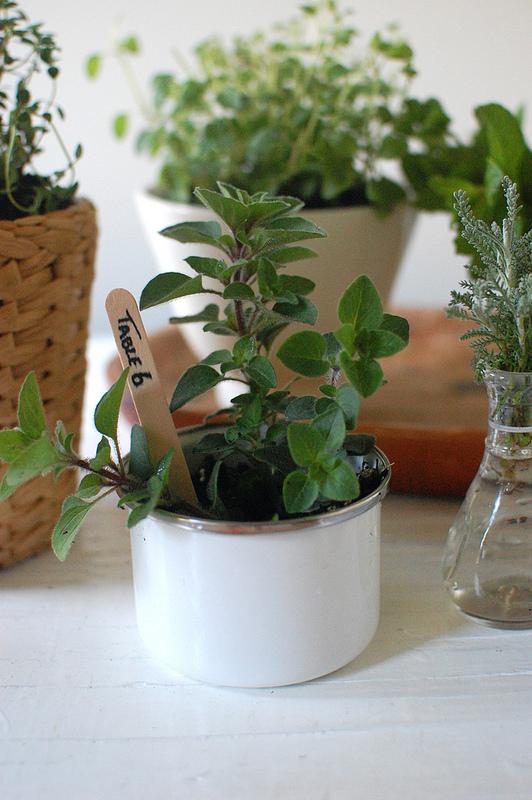 herbal centerpiece