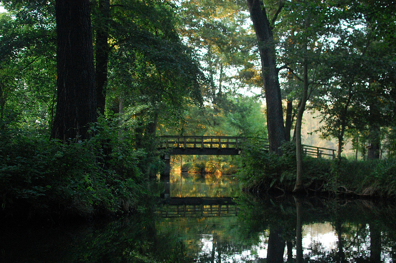 the spree forest
