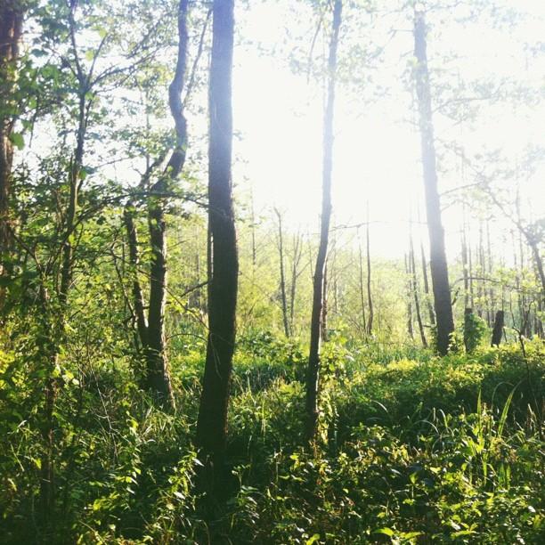 Spreewald forest
