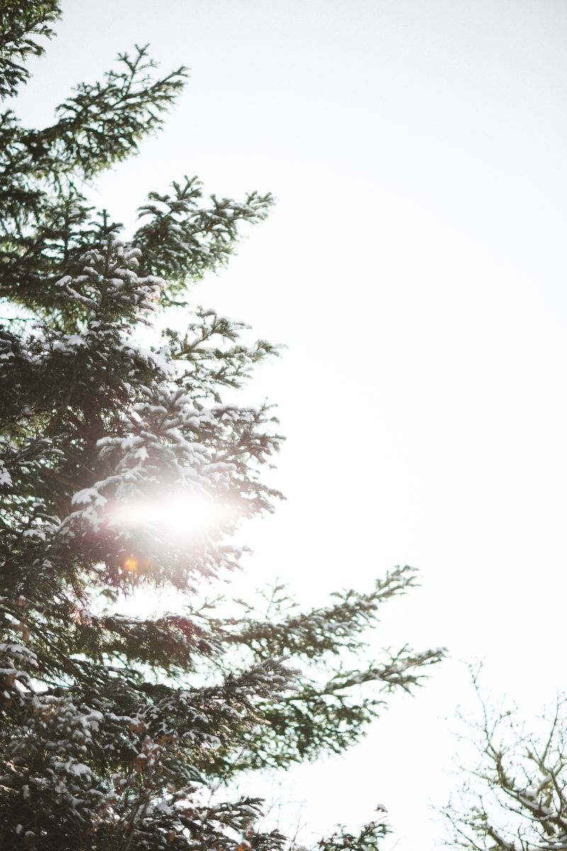 CS-ForagedWreath-CherylJuetten-002