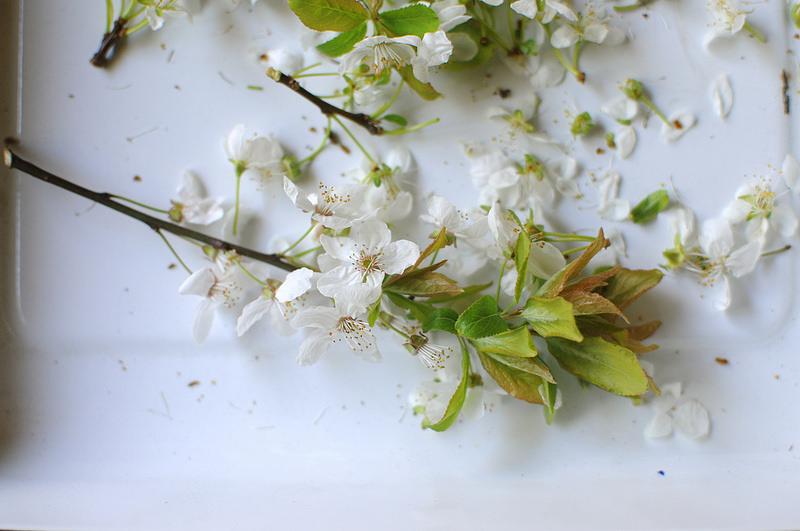 pear blossom seven