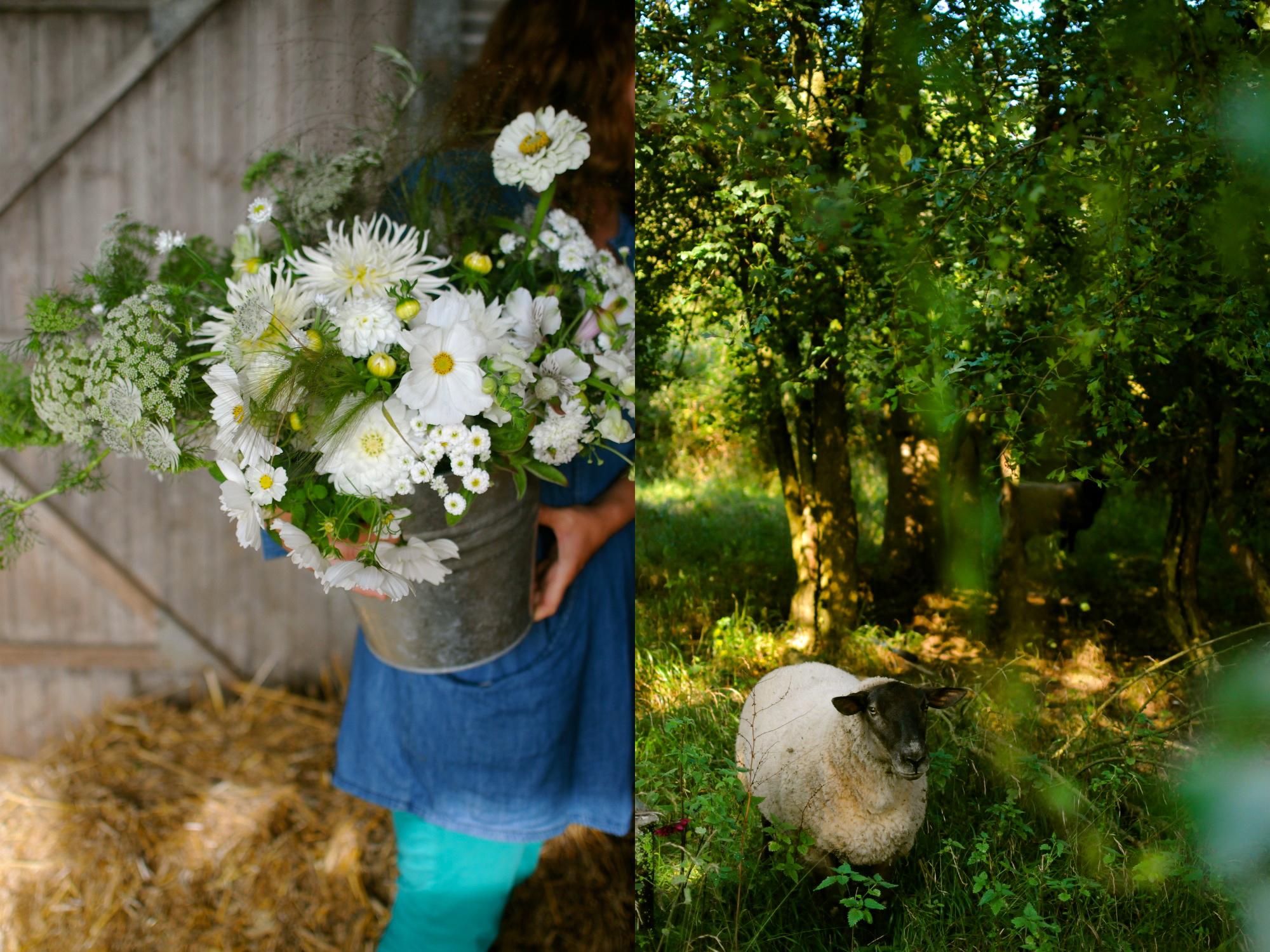 england sheep and lara flowers