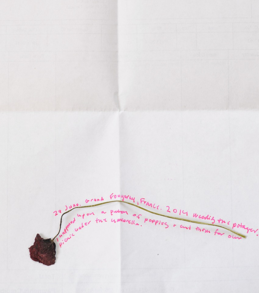 pressed flowers and their stories frolic 3