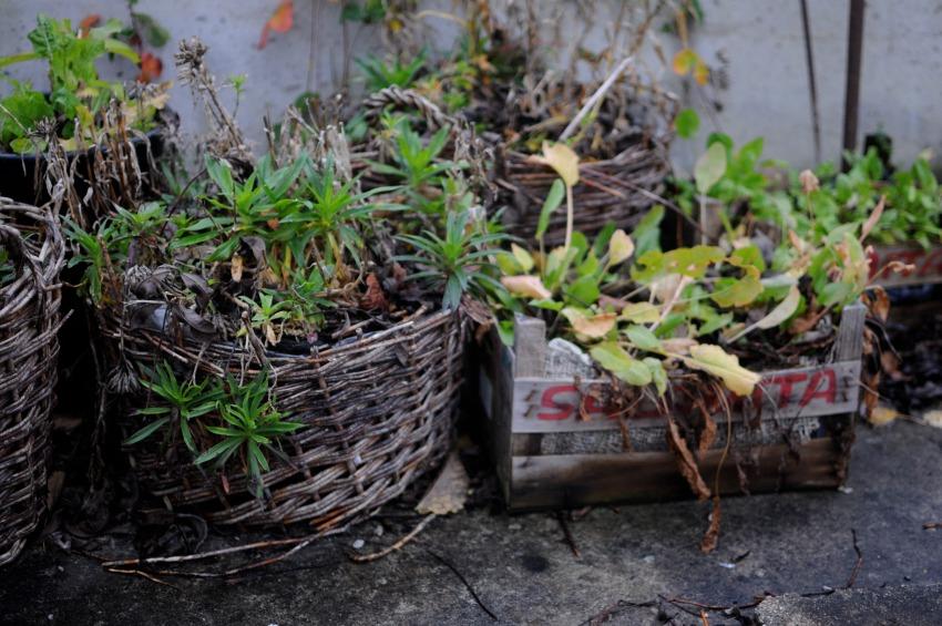 leva kungslador gotland crate garden