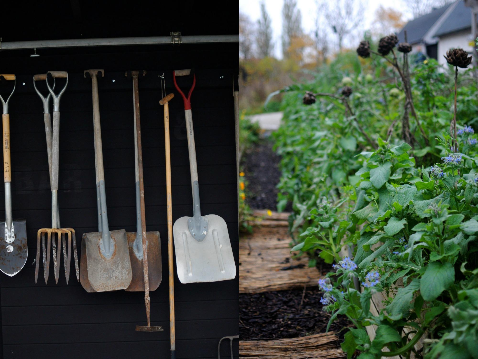 garden tools sweden gotland artichokes