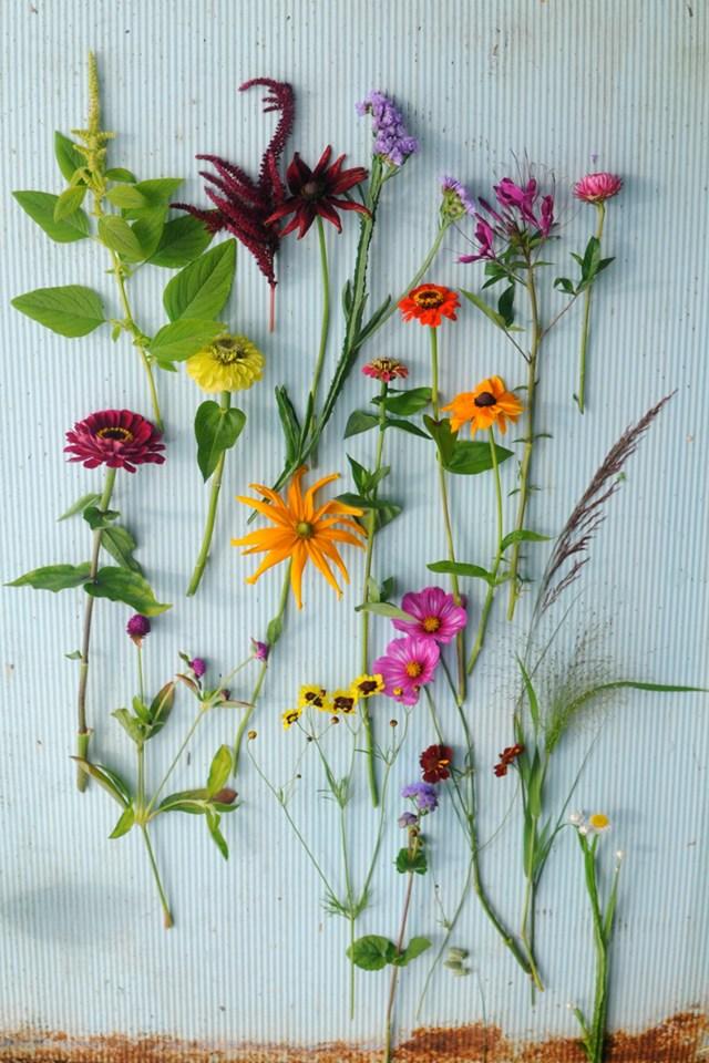 manor farm cottage flowers