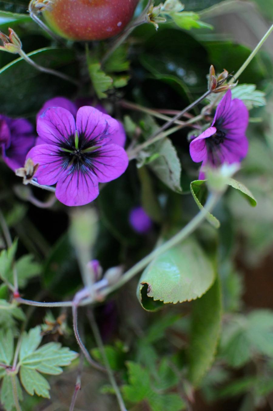 fall arrangement geranium