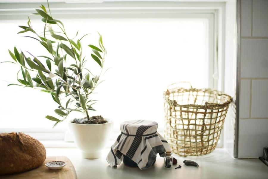 kitchen olive tree