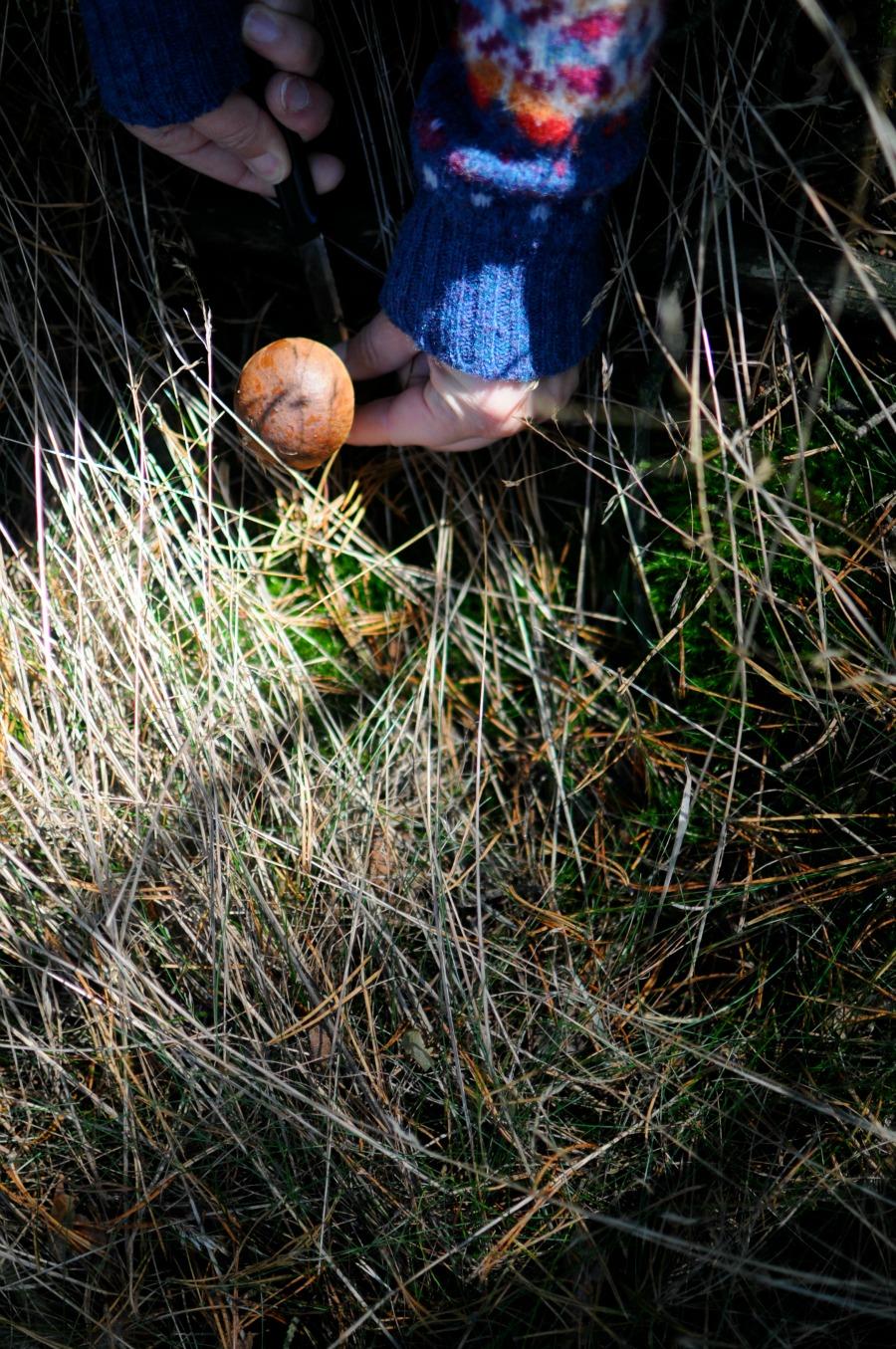 mushroom 2blog