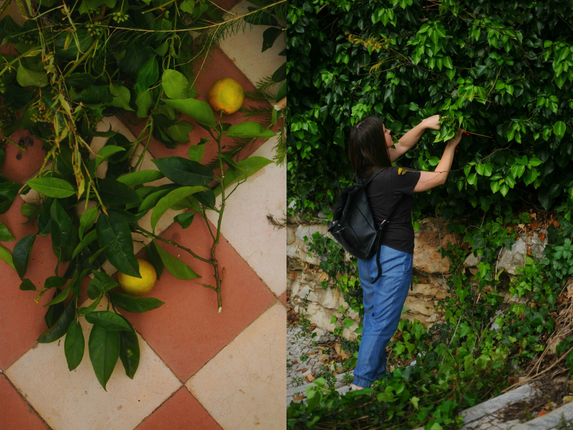 foraged oranges