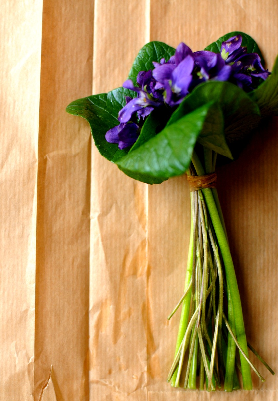 fresh cut violets