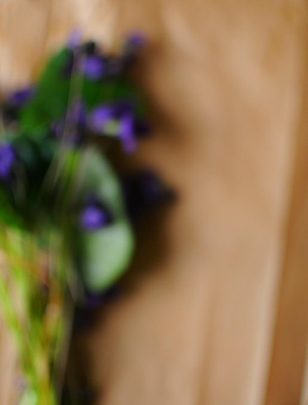 violet odorata