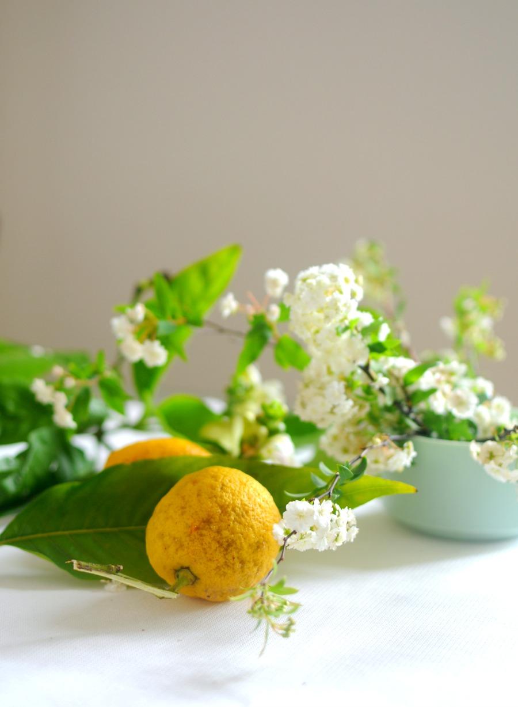 lemon spirea