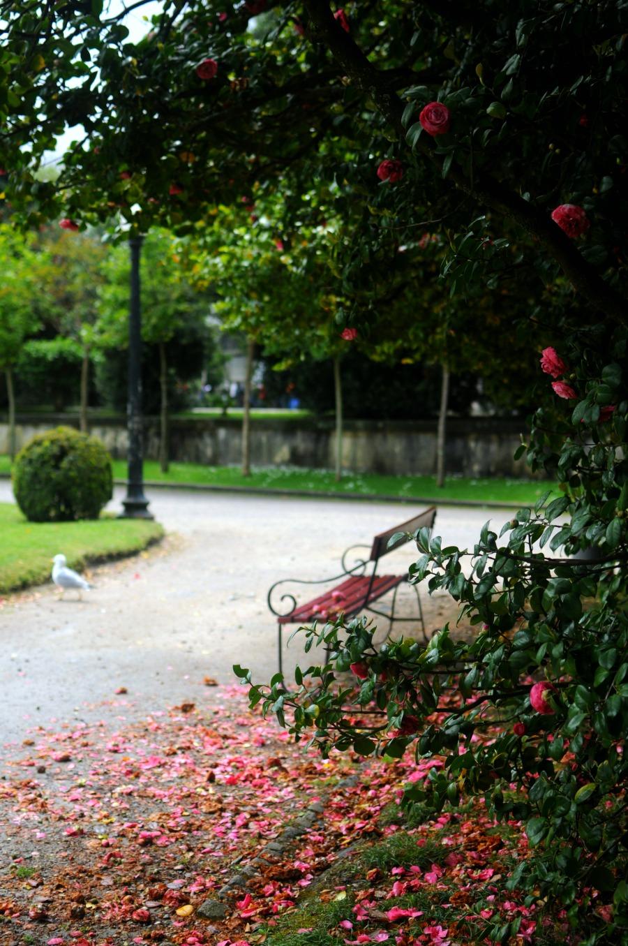 camellias porto