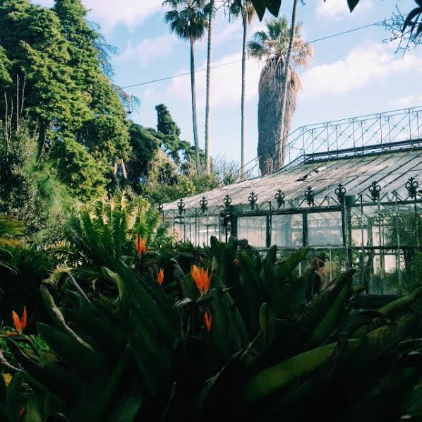 portugal greenhouse