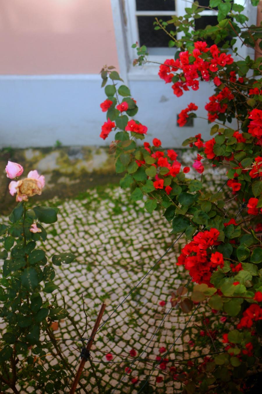 garden lisbon bouganvillia