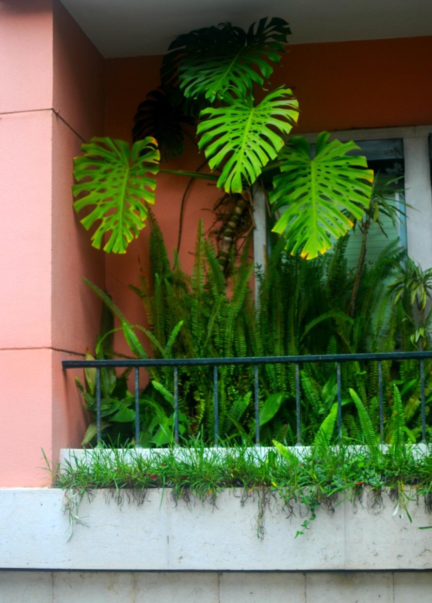 garden lisbon ferns