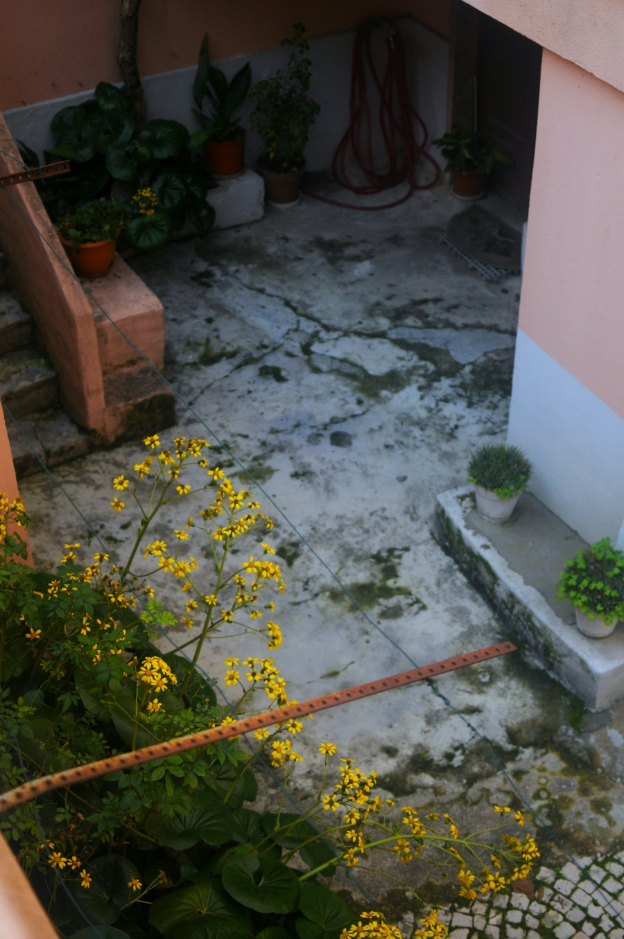 garden lisbon yellow