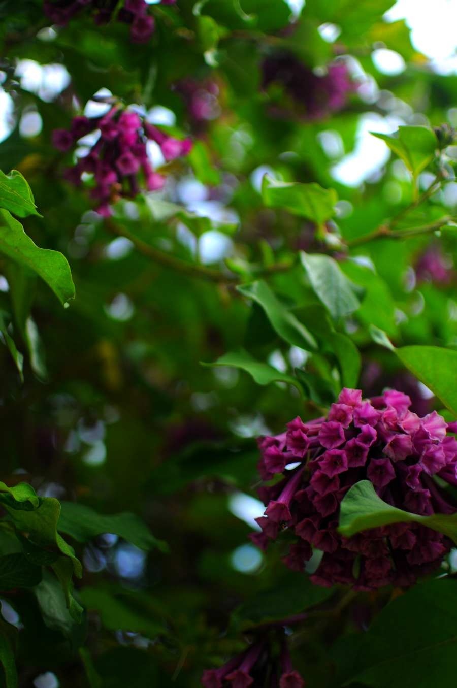 violet tube flower