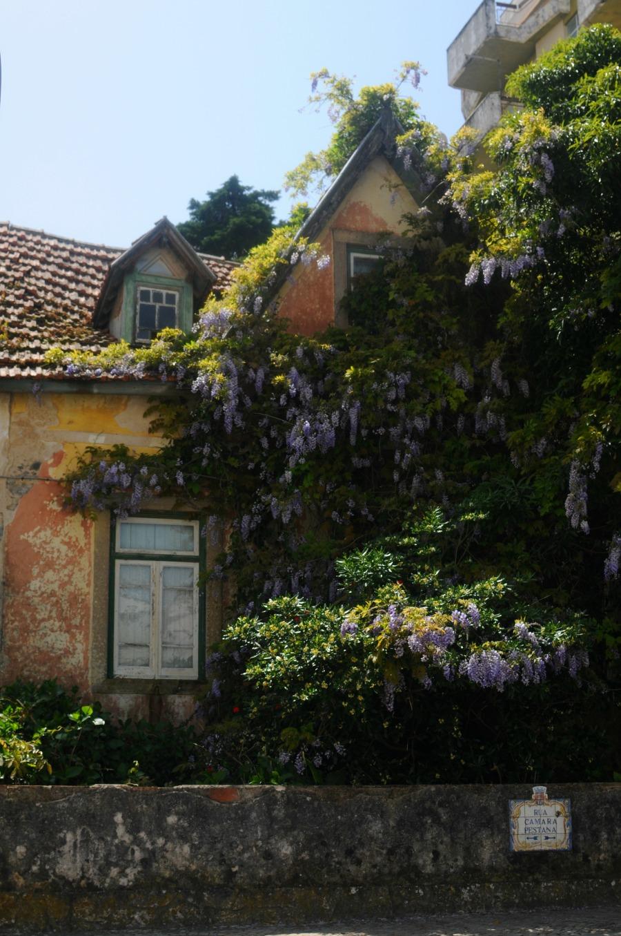 wisteria house sintra